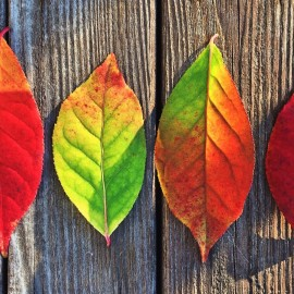 Tips for making a fresh start this autumn
