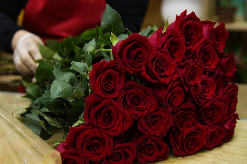 Love Rose Flowers Flower Roses Woman Girl Women